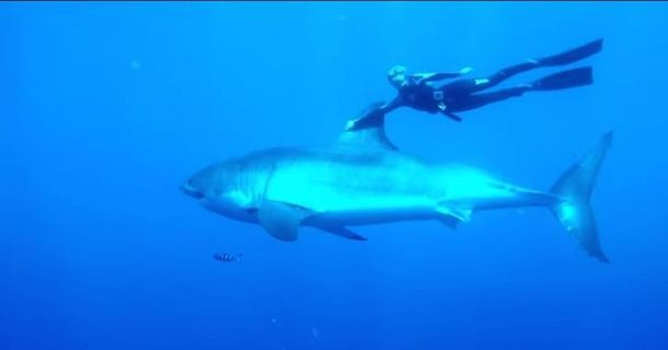 Great Whites, One Woman, No Cage. Amazing
